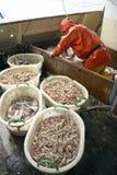 Fishing Dublin Bay prawns at sea Royalty Free Stock Photo