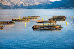 Fishing farm Royalty Free Stock Image
