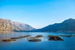 Fishing farm Stock Photography