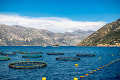 Fishing farm in Kotor bay Stock Images