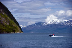 Fishing in fjord royalty free stock photo