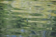 Fishing float floating in the water Royalty Free Stock Photo