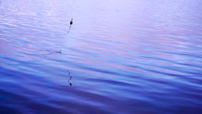 Fishing float in the lake stock footage
