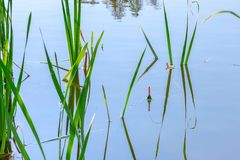 Fishing float in the reeds. Morning or afternoon fishing on the river. fishing float in the reeds. rest and relaxation in nature, an interesting hobby royalty free stock photography