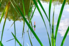 Fishing float in the reeds. Morning or afternoon fishing on the river. fishing float in the reeds. rest and relaxation in nature, an interesting hobby stock photos