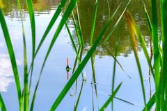 Fishing float in the reeds. Morning or afternoon fishing on the river. fishing float in the reeds. rest and relaxation in nature, an interesting hobby royalty free stock photos