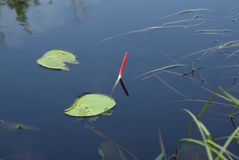 Fishing float on water. The fishing float swims in water Stock Images