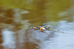 Fishing floater. Dragonfly sitting on a fishing float stock photos