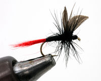 Fishing fly in holder Stock Photography