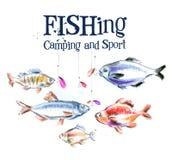 Fishing. fresh fish on a white background Stock Photos