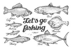 Fishing. Hand drawn vector fish. Sketch trout, carp, tuna, herring, flounder, anchovy. Fishing. Hand-drawn vector fish. Sketch trout, carp, tuna herring flounder Stock Photos