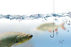 Fishing hook under water and trout fish Stock Photography