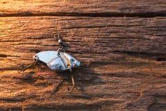 Fishing hook on wood background Stock Photos