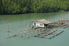 Fishing house. In estuary, Thailand Royalty Free Stock Photography