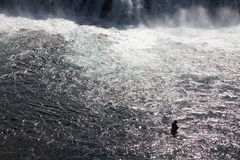 Fishing Iceland. Solitary fisherman at waterfall Iceland Stock Image