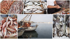 Fishing industry collage royalty free stock photography