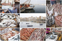 Fishing industry collage royalty free stock photo