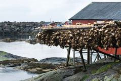 Fishing industry in Norway Stock Photos