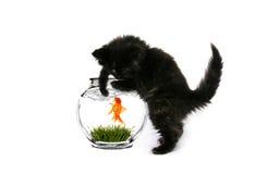 Fishing Kitty Royalty Free Stock Photography