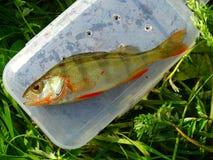 Fishing on the lake. Fish hooks bait worm Stock Photo