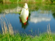 Fishing on the lake. Fish hooks bait worm catch Stock Image