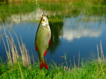 Fishing on the lake. Fish hooks bait worm catch Stock Photo