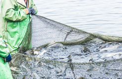 Fishing on the lake. Man pulls a fish net royalty free stock photos