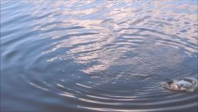 Fishing on the lake and river. Fish stock footage