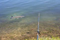 Fishing in a lake Stock Photos