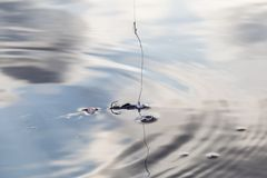 Fishing lure. In water. See my other works in portfolio stock photo