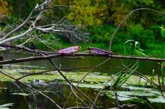 Fishing lures Royalty Free Stock Image