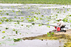 Fishing man. A fishing man goes fish ,sitting apon a lake with lots of lotus leaf Stock Images