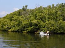 Fishing the Mangrove edge. A fisherman looks for the snapper that hides in the mangrove roots royalty free stock images