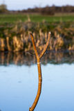 The fishing match. A rod rest ready for the start of angling match in the Cambridgeshire countryside royalty free stock photos