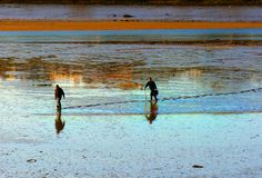 Fishing men digging for lung worm and fishing bait Royalty Free Stock Image
