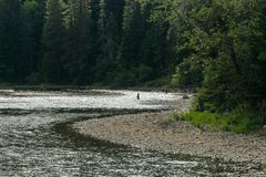Fishing for salmon. Fishing in a mountain stream in Gaspe, Quebec Royalty Free Stock Photo