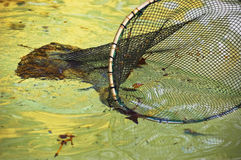 Fishing net. Cleaning a fountain stock image
