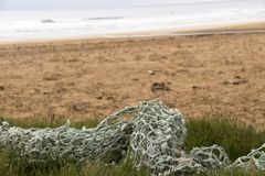A fishing net at the beach. In Raudarsandur a very special beach in Iceland stock photo
