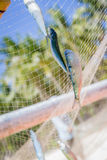 Fishing net with fish Stock Photos