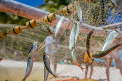 Fishing net with fish Royalty Free Stock Photos