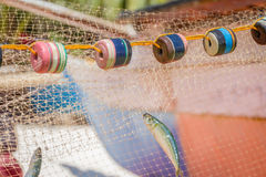 Fishing net with fish Royalty Free Stock Images