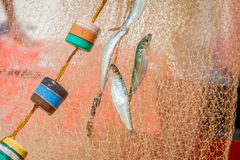 Fishing net with fish Royalty Free Stock Photography
