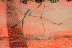 Fishing net with fish Stock Image