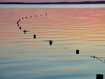 Fishing net floats on water Royalty Free Stock Photo