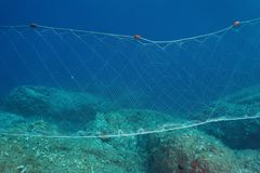 A fishing net gillnet underwater on the seabed. A fishing net gillnet underwater fixed on the seabed in the Mediterranean sea, Costa Brava, Spain stock images
