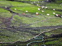 Fishing net laid out on a lawn. The Fishing net laid out on a lawn stock image