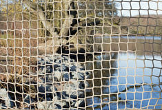 Fishing net. A lake in a forest, in the foreground a fishing net royalty free stock photography