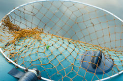 Fishing net on a boat close-up background. A fishing net lies on the background of an inflatable boat Royalty Free Stock Image
