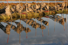 Fishing net in the morning light Stock Photography