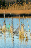 Net,trap,entrapment,Fishing net,lake,job Stock Photos